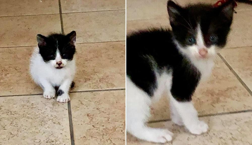 Positano Notizie Due Dolcissimi Gattini In Cerca Di Coccole E Di
